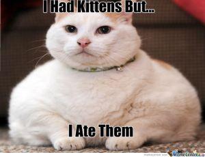 fat-cat_o_434169
